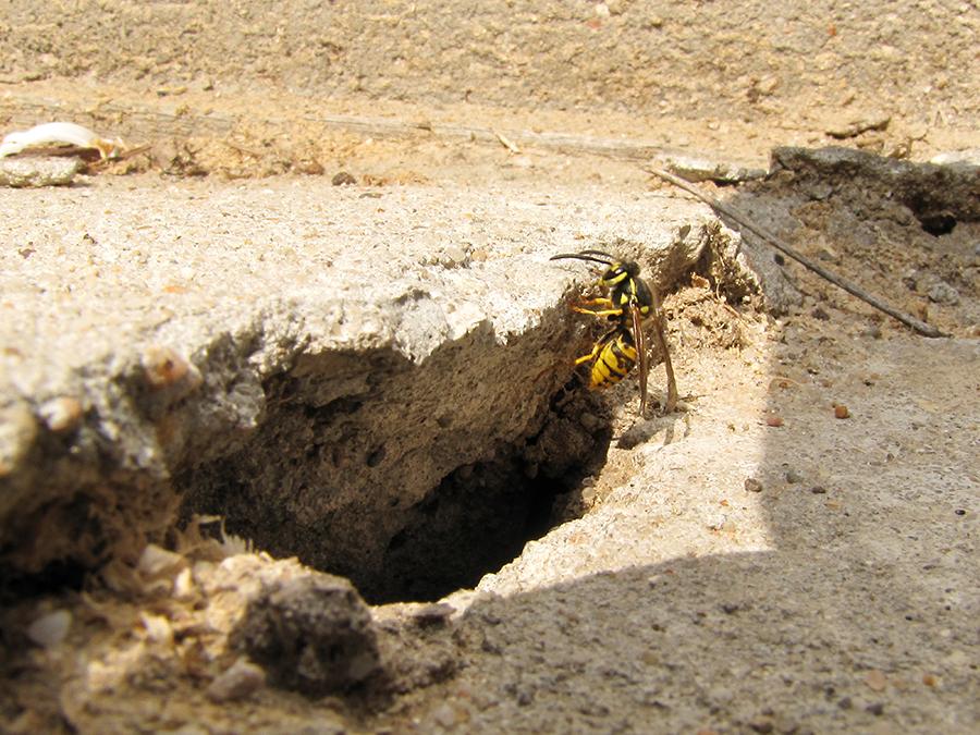 92 - vespidae bunkier (5)